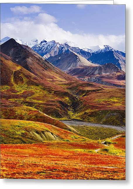 Fall Colours And Alaska Range, Denali Greeting Card by Yves Marcoux