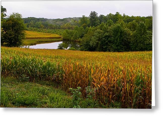 Fall Corn In Virginia Countryside Greeting Card by Richard Singleton