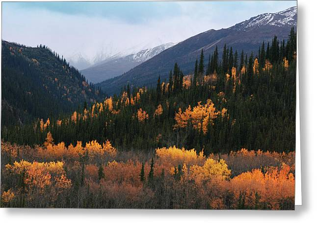 Fall Denali National Park Greeting Card