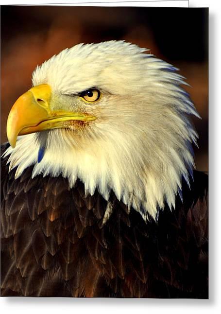 Fall Eagle 5 Greeting Card by Marty Koch