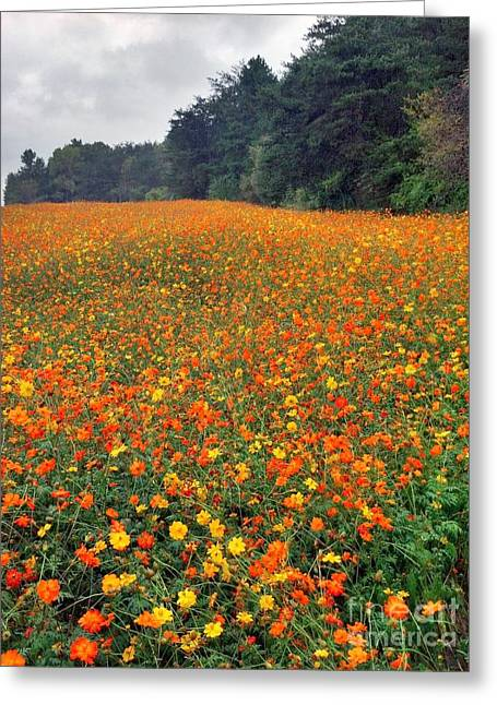 Greeting Card featuring the photograph Fall Flowers by Janice Spivey