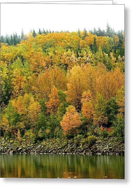Greeting Card featuring the photograph Fall Foliage by Sylvia Hart