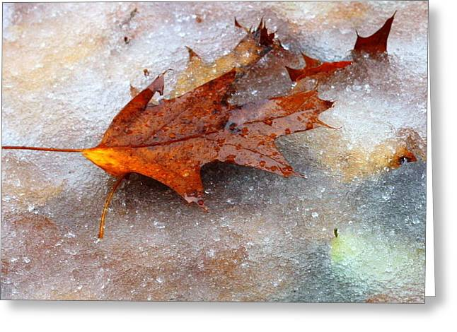 Greeting Card featuring the photograph Fall Frost by Patrice Zinck