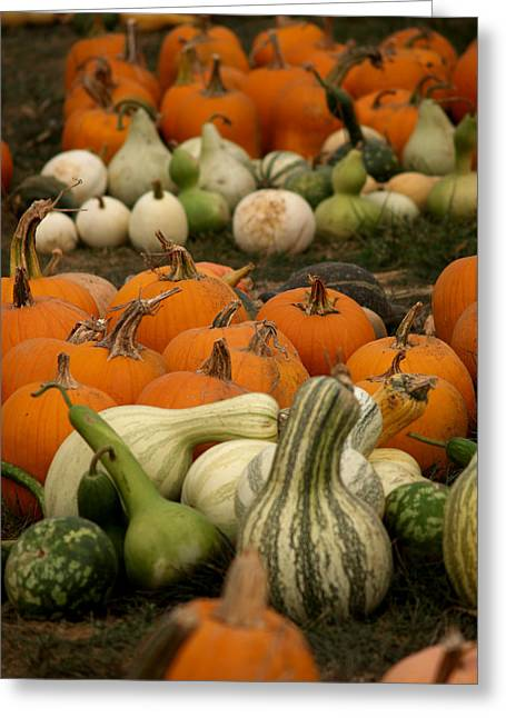 Fall Harvest Greeting Card by Brenda Flynn