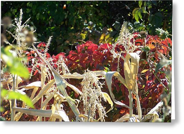 Fall Harvest Of Color Greeting Card
