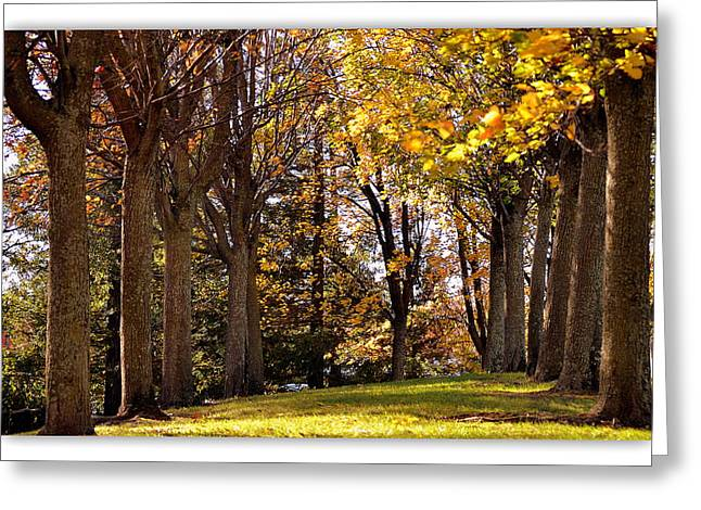 Greeting Card featuring the photograph fall in Folsom by Rima Biswas
