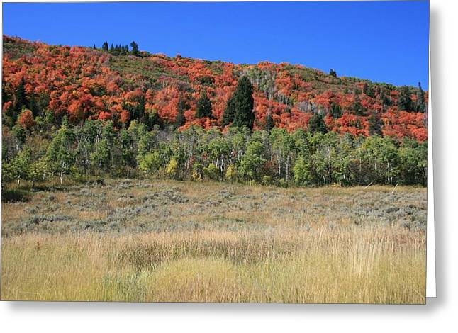 Fall In Park City Greeting Card