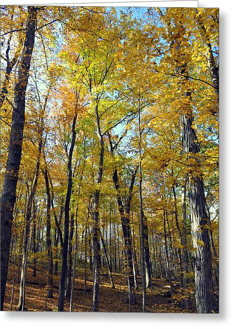 Fall In The Forest 2 Greeting Card by Marty Koch