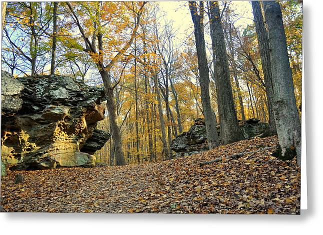 Fall In The Forest 3 Greeting Card by Marty Koch