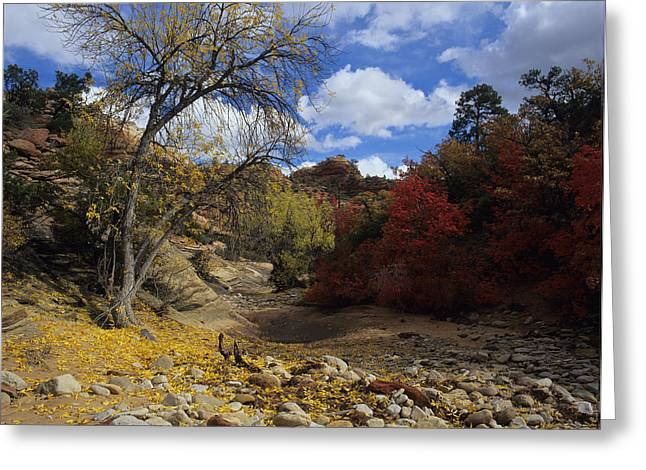 Fall In Zion High Country Greeting Card
