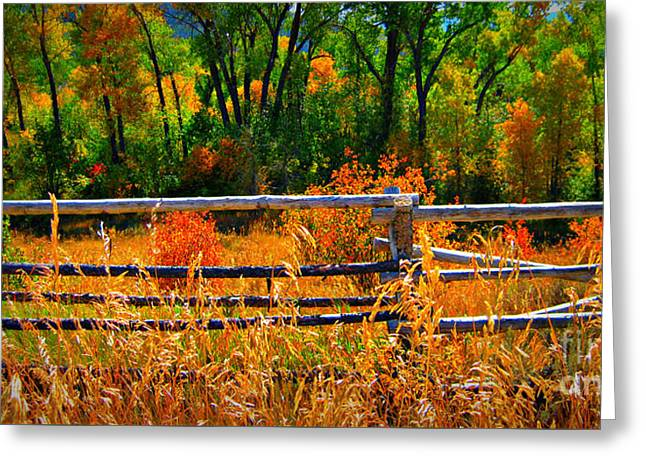 Greeting Card featuring the photograph Fall  by Janice Westerberg
