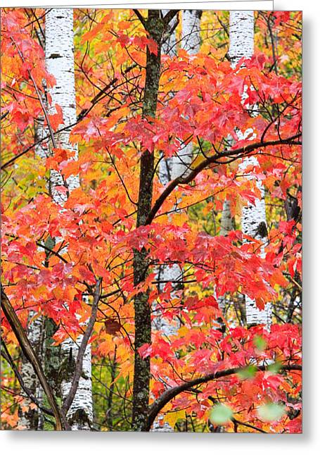 Fall Layers II Greeting Card by Adam Pender