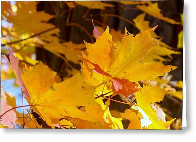 Fall Leaves Greeting Card by Angelika MacDonald