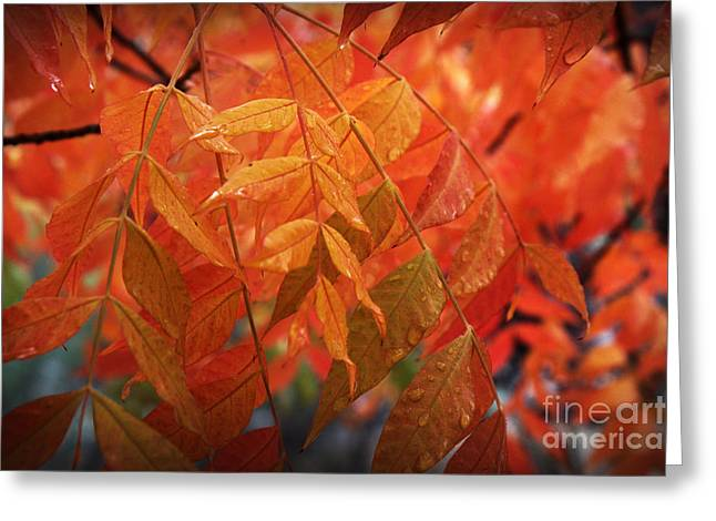 Fall Leaves In Gold Greeting Card