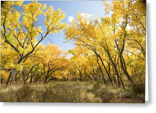Fall Leaves In New Mexico Greeting Card