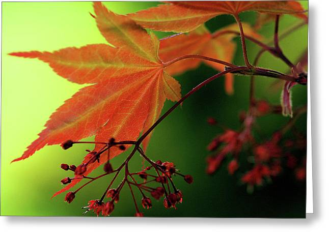 Fall Leaves Greeting Card by Michelle Joseph-Long
