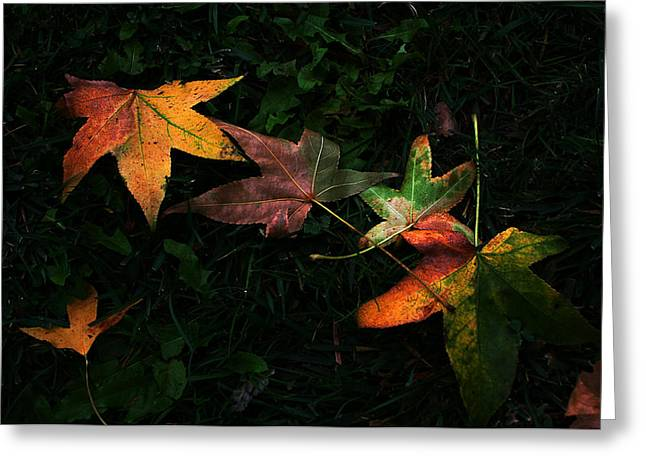 Fall Leaves On Grass Greeting Card by Dorothy Cunningham