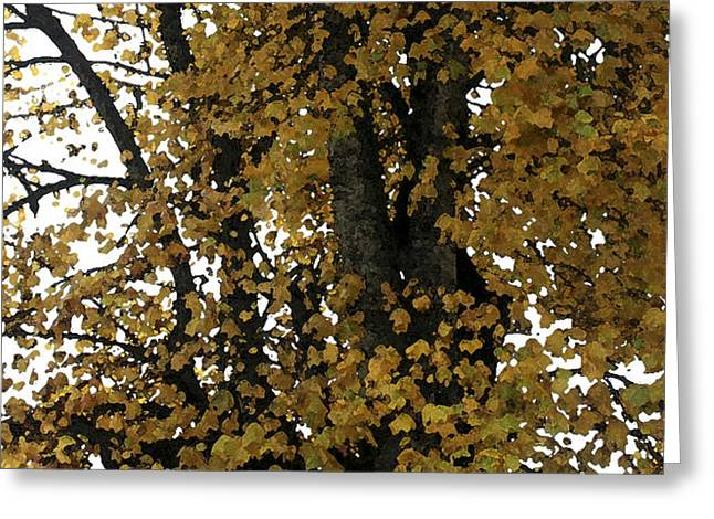 Fall Leaves Panorama Greeting Card by Mary Gaines