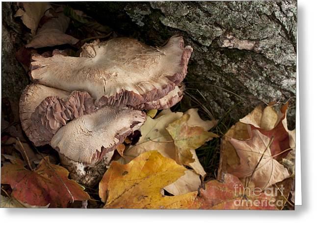 Fall Mushrooms Greeting Card by Wilma  Birdwell