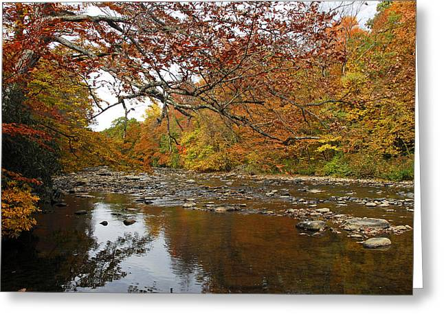 Fall On Laurel Hill Creek Greeting Card by Dan Myers