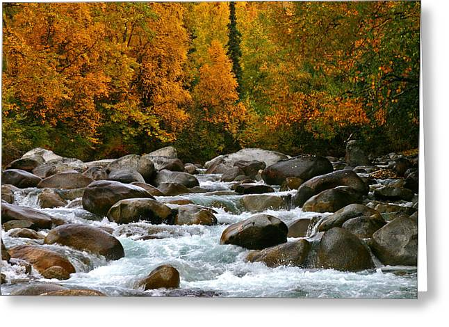 Fall On The Little Susitna River Greeting Card