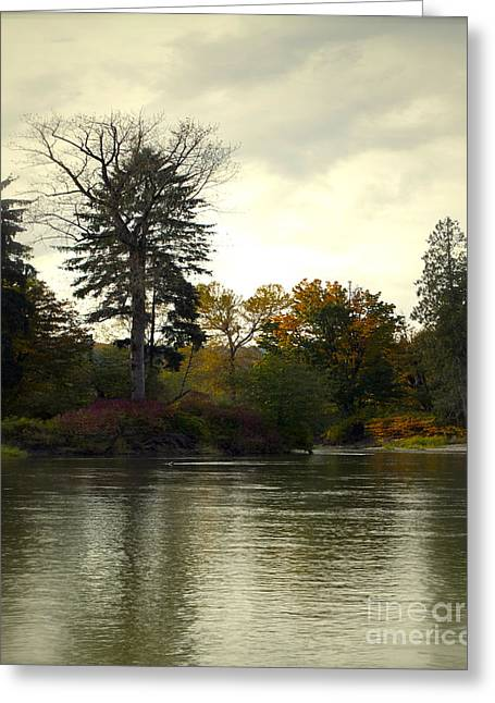 Fall On The Snohomish River Greeting Card by Gwyn Newcombe