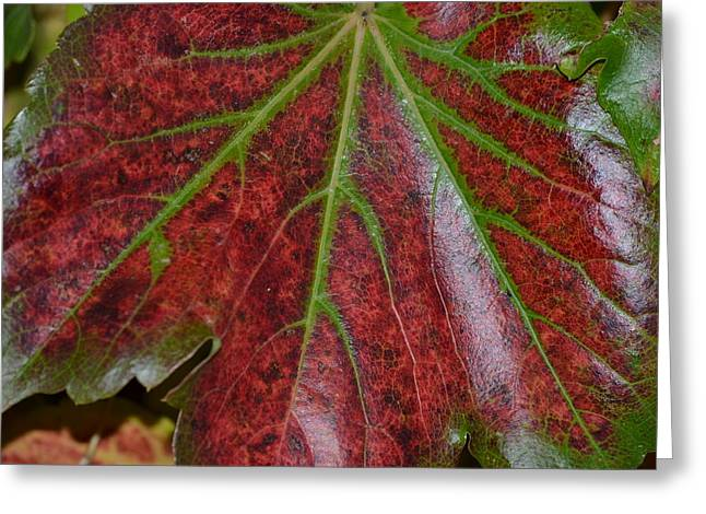 Fall On The Vine Greeting Card by Kim Hymes