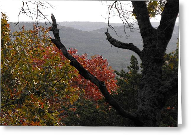 Fall Picture In Texas Greeting Card by Rebecca Cearley