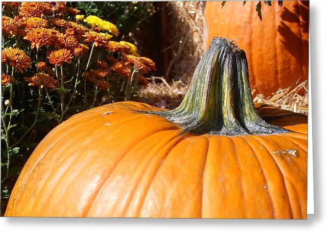 Fall Pumpkin Greeting Card by Kimberly Perry