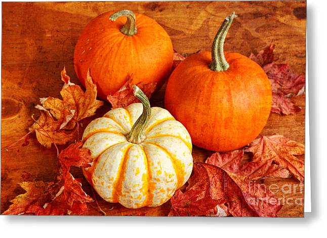 Fall Pumpkins And Decorative Squash Greeting Card by Verena Matthew