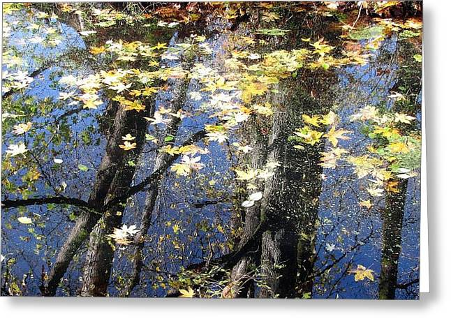 Greeting Card featuring the photograph Fall Reflections by I'ina Van Lawick
