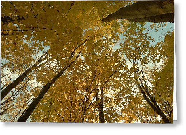 Fall Scene Greeting Card by Tom Bush IV