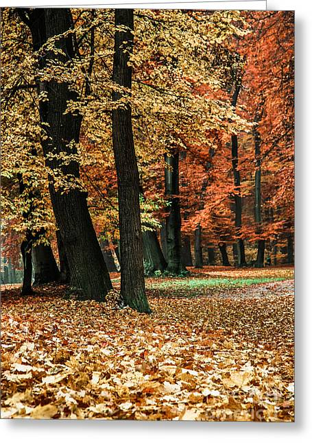 Fall Scenery Greeting Card by Hannes Cmarits