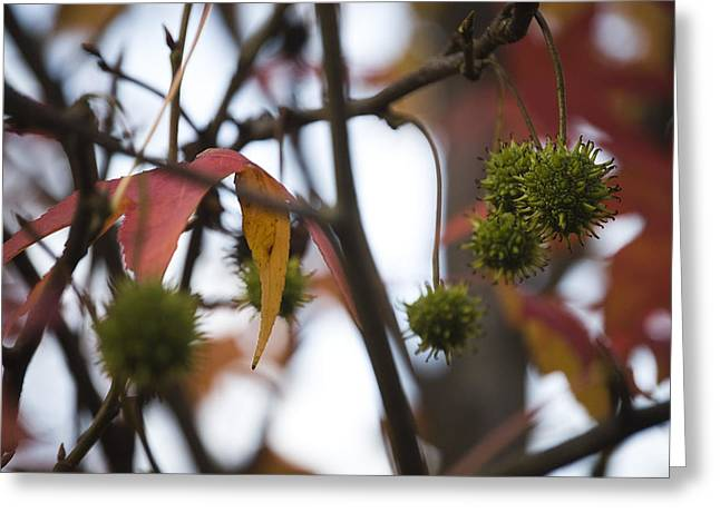 Fall Seeds Greeting Card