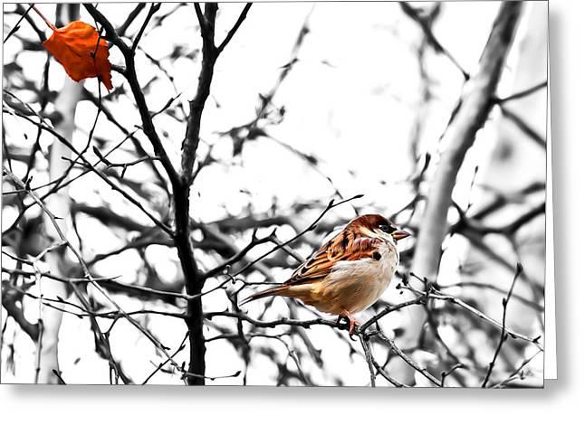 Fall Sparrow Greeting Card