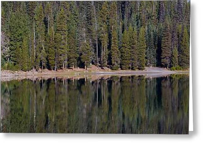 Fall Tree On Elk Lake Greeting Card