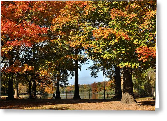 Fall Trees And Lake Greeting Card by Diane Lent