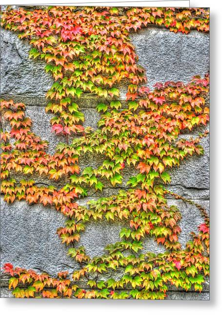Greeting Card featuring the photograph Fall Wall by Michael Frank Jr