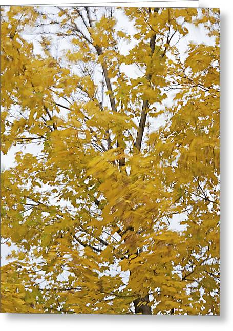 Fall Wind 1 Greeting Card by Steve Ohlsen
