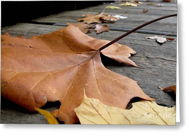 Fallen Leaf Greeting Card by Jack Schultz
