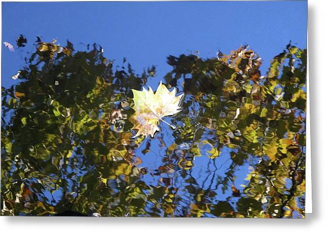 Greeting Card featuring the photograph Fallen Leaf by Ralph Jones