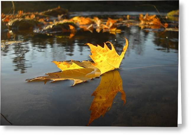 Fallen Maple Leaf Reflection Greeting Card