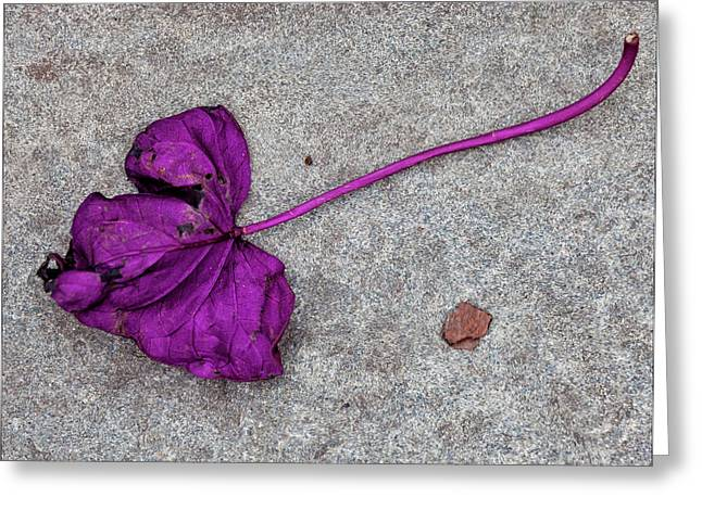 Fallen Purple Leaf Greeting Card by Robert Ullmann