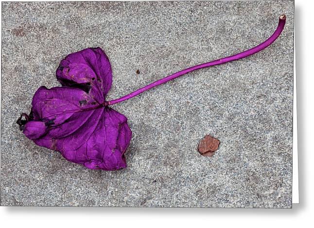 Fallen Purple Leaf Greeting Card