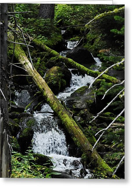 Fallen Tree Falls Greeting Card by Arlyn Petrie