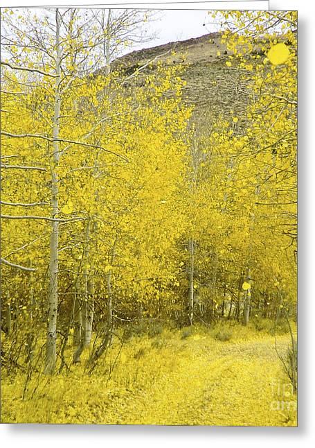 Falling Aspen Leaves Greeting Card