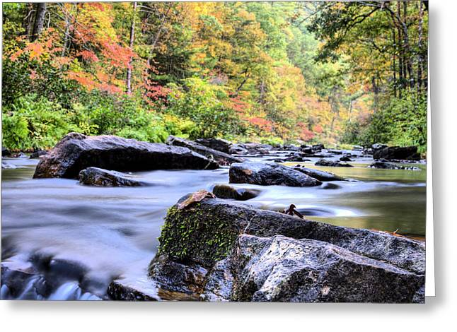Falling Into Autumn Greeting Card by JC Findley