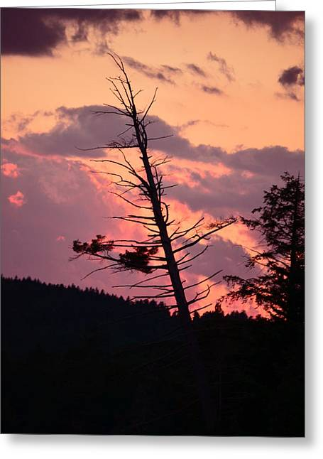 Falling Into The Sunset Greeting Card by Mandi Howard