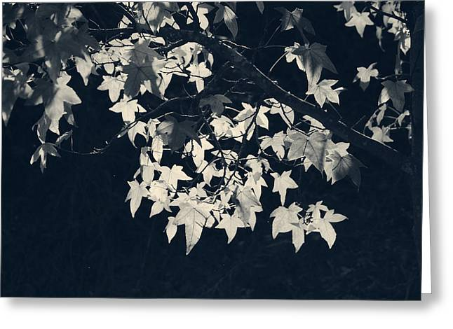 Falling Stars Greeting Card by Laurie Search
