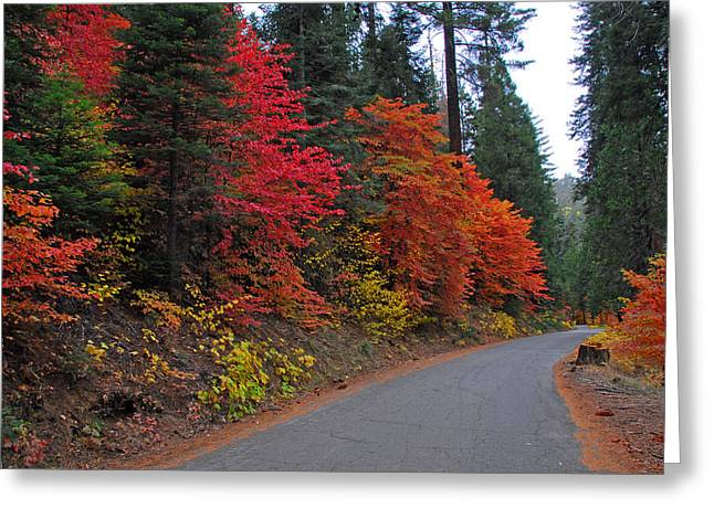 Fall's Splendor Greeting Card by Lynn Bauer